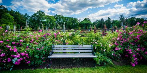 Gardens Are A Beautiful Place For Romantic Walks Or Nature Exploration With  Children.