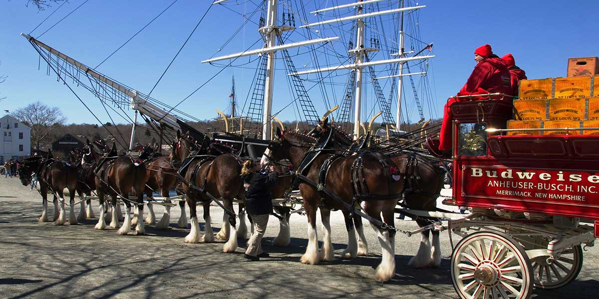 Clydesdales at Mystic Seaport - Andy Price Mystic Seaport