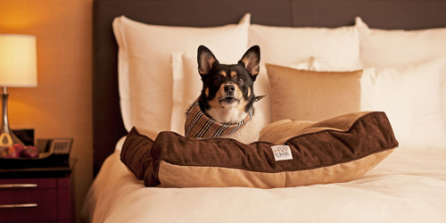Pet Friendly Lodging in Connecticut