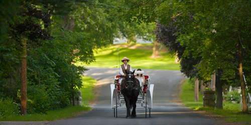 Summer in Connecticut - Horse Drawn Carriage Ride in Litchfield County