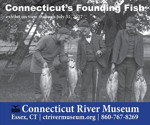 Connecticut's Founding Fish - On exhibit now thru July 31st, 2017 at CT River Museum